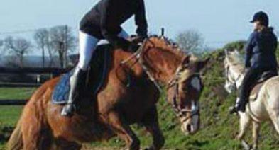 Adultes et chevaux