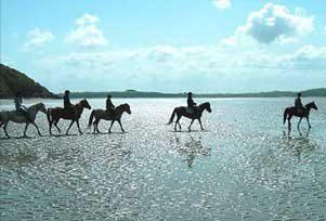 chevaux au bord de la mer